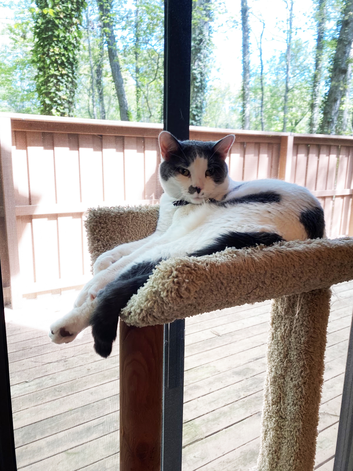 A closeup photo of a black and white cat lying down in a cat tower in front of a sliding glass window featuring a deck, porch, and greenery.