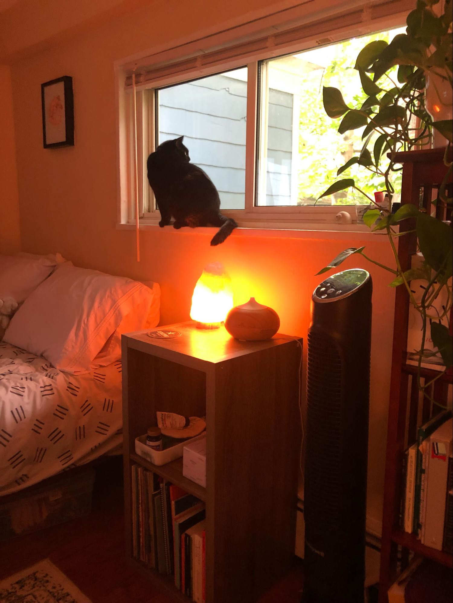 A picture of the author's bed and bedside table during the day. A salt lamp provides dim lighting and her cat sits on the window sill.