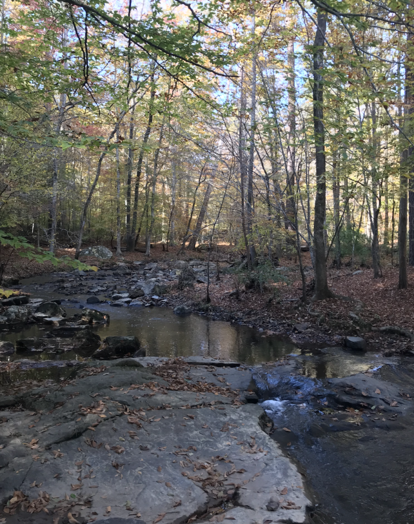 The Bolin creek is surrounded by trees.