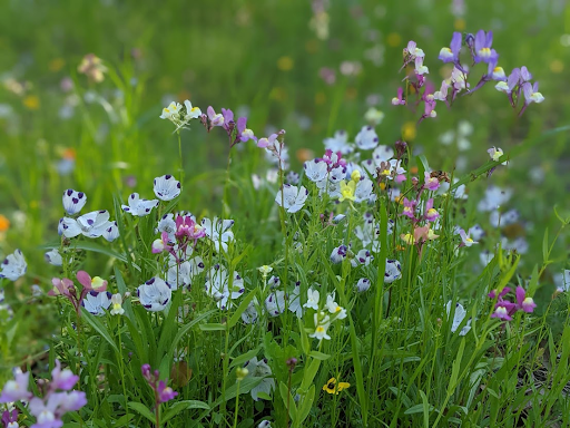 Blue, purple, yellow, pink, and orange wild flowers in a green field.
