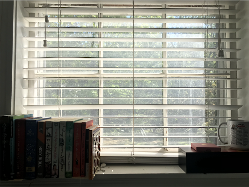 A view of trees through the author's window. There are books and a mug on the windowsill.