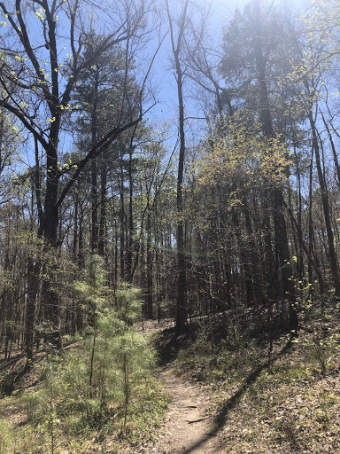 Trees and other vegetation on a forest trail.